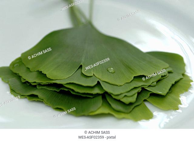 Ginkgo biloba on plate with water drop