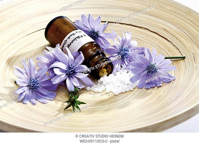 Bottle with Bach Flower Stock Remedy, Chicory Cichorium intybus on wooden plate