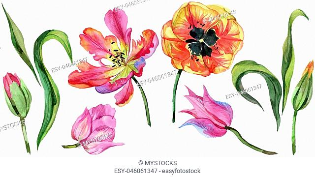 Colorful summer tulip. Floral botanical flower. Wild spring leaf wildflower isolated. Aquarelle wildflower for background, texture, wrapper pattern