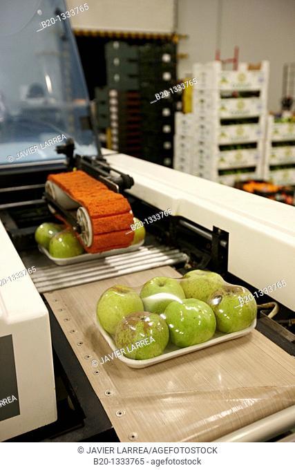 Packing apples, Mercabilbao fruits and vegetables wholesale market, Basauri, Bilbao, Bizkaia, Euskadi, Spain