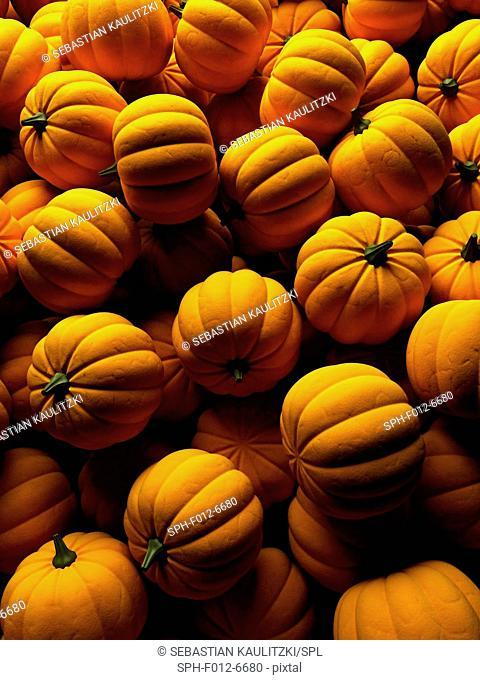Pumpkins, Illustration