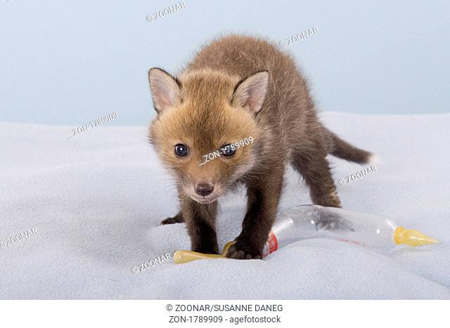 young red fox baby bottle, baby bottle Red fox