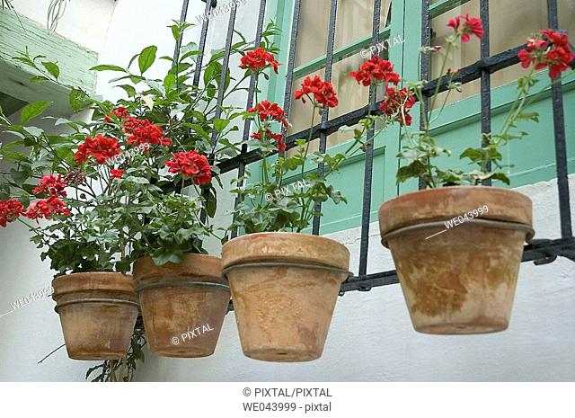 Four pots of carnations in a window of an Andalusian patio