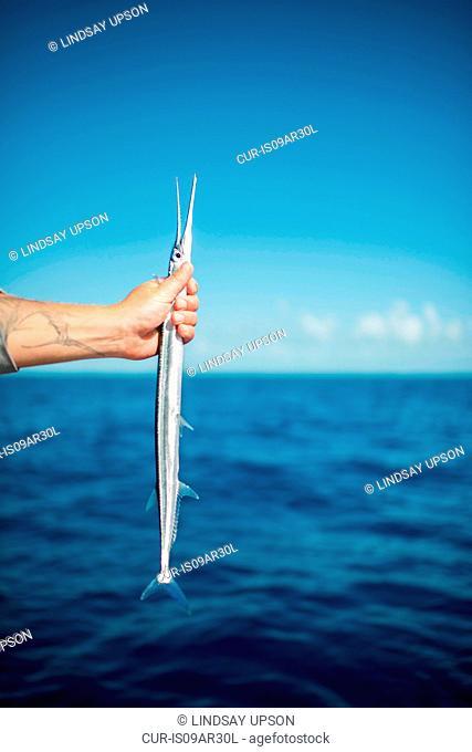 Fishermans hand holding fish, Islamorada, Florida, USA