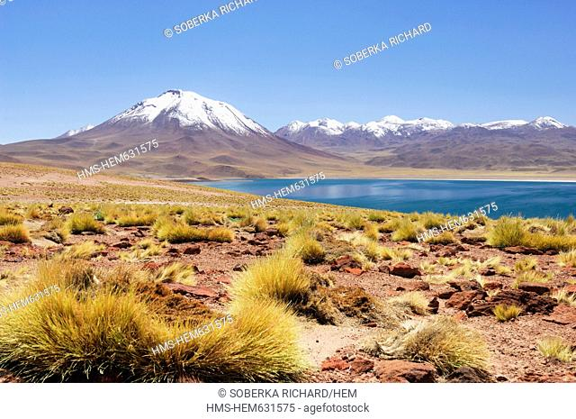 Chile, Antofagasta region, Atacama Desert, Miniques and Miscanti lagoon, lagoon Miscanti at 4200 meters altitude in the Andes