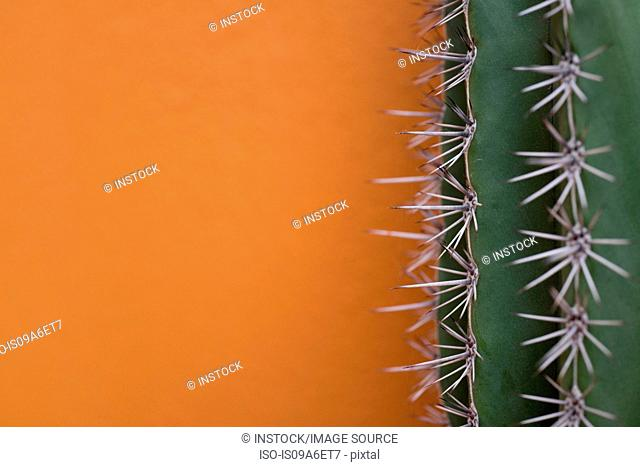 Cactus against orange background
