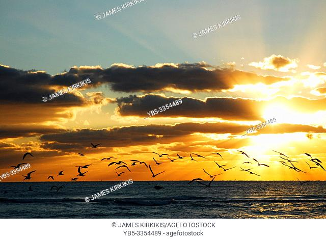 Seagulls take flight over the sea during sunrise
