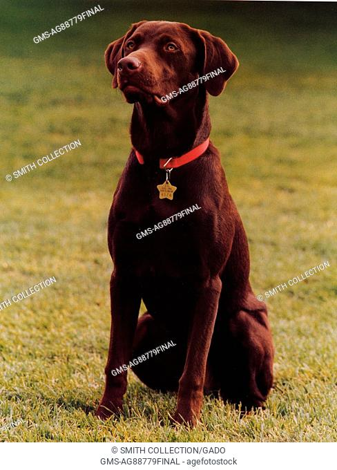 Official Portrait of Buddy the Dog, pet of the Bill Clinton and Hillary Clinton First Family, April 22, 1998. Image courtesy National Archives