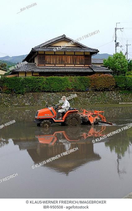 Rice farmer thatching his rice paddy, traditional farm house in the back, Iwakura, Kyoto, Japan, Asia