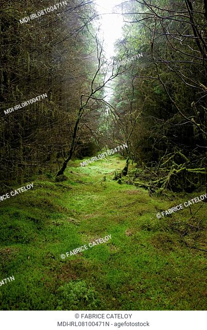 Irlande du Nord - Environs d'Enniskillen - Lough Navar Forest Park