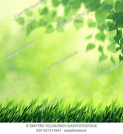 Beech fores, abstract spring backgrounds with beech tree and green grass