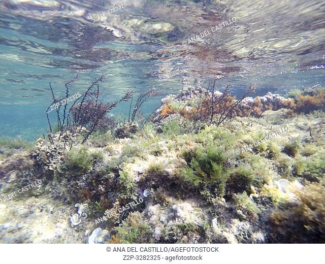Underwater Las Rotas beach San Antonio cape in Denia Alicante Province Spain