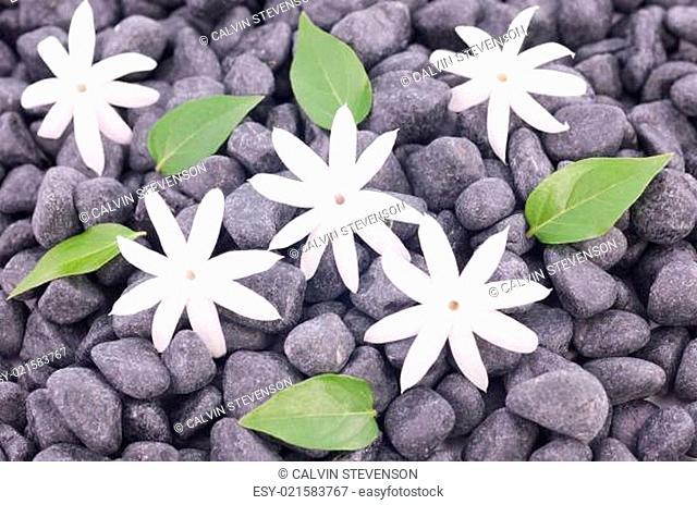 White jasmine flowers and leaves over zen stones background