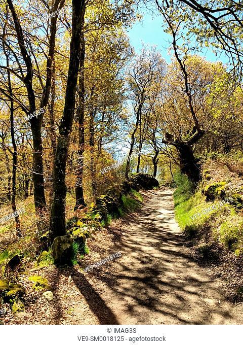 Camino de Santiago near Peruscallo, Lugo province, Spain