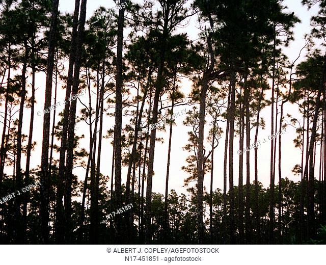 Florida Everglades, Long Pine Key