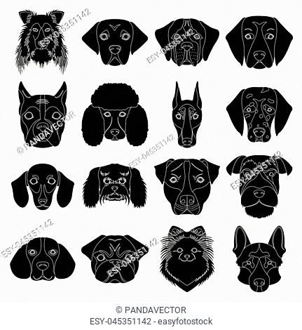 Doberman, Dalmatian, Dachshund, Spitz, Stafford and other breeds of dogs.Muzzle of the breed of dogs set collection icons in black style vector symbol stock...