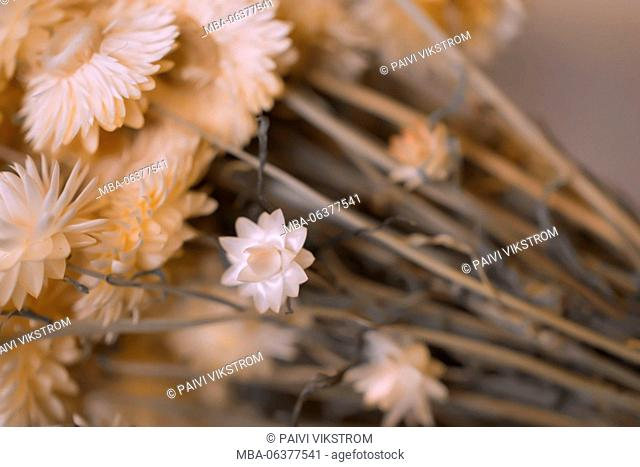 4 season autumn,beige,closeup,colorless,concept,countryside,decoration,dried,dry,flora,flower,garden,herb,idea,image,meadow,memory,nature,pink tone,plant,rural