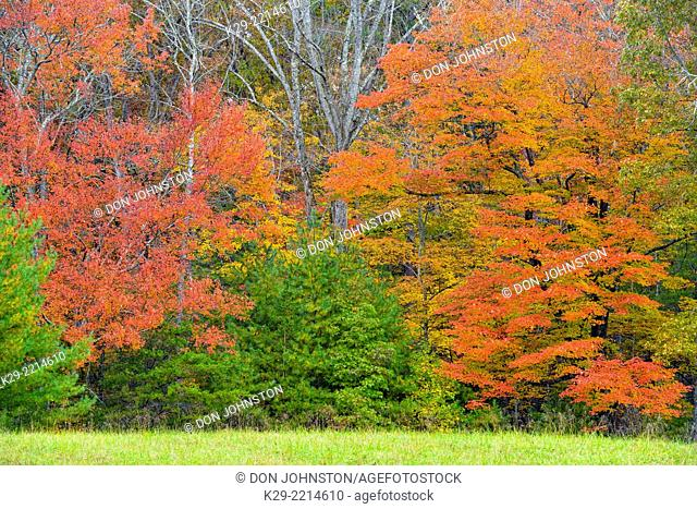 Autumn colour in Cades Cove, Great Smoky Mountains NP, Tennessee, USA