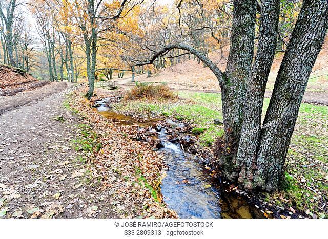 Yedra stream in the Tiemblo's chestnut in the Sierra de Gredos. Avila. Castilla Leon. Spain. Europe