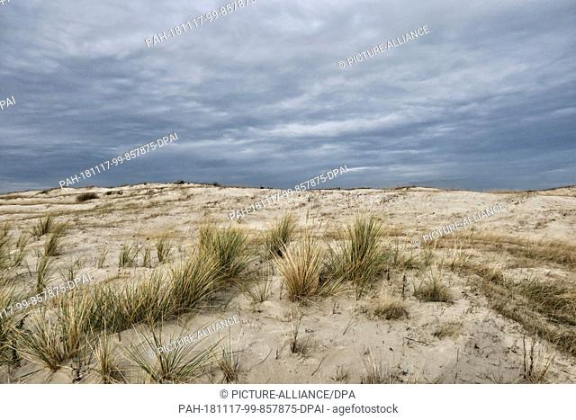 10 November 2018, Schleswig-Holstein, Heiligenhafen: A dune on a stone warder overgrown with little grass. The harbour town on the Baltic Sea in the district of...