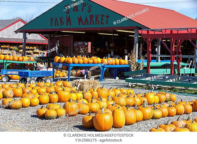 Pumpkins ready for Halloween at J & P's Farm Market in Trenton, Maine