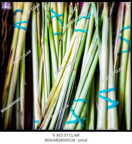 Close up of green chives bundled with rubber bands