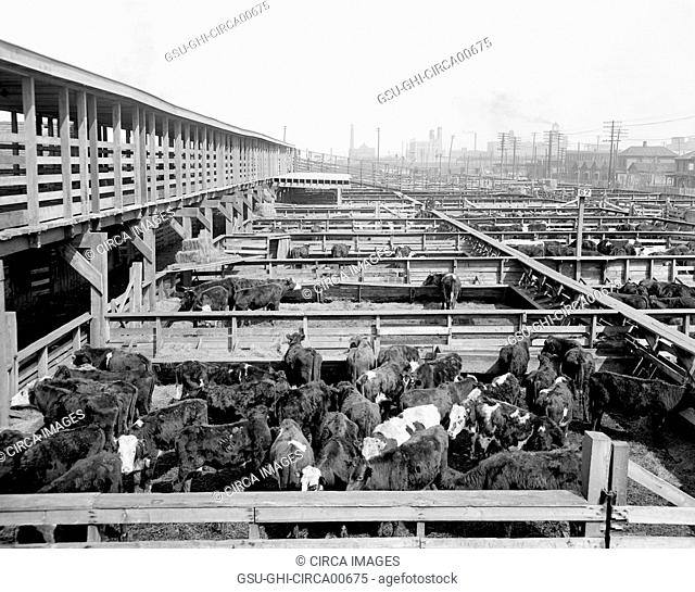 Stockyards, Kansas City, Missouri, USA, circa 1906
