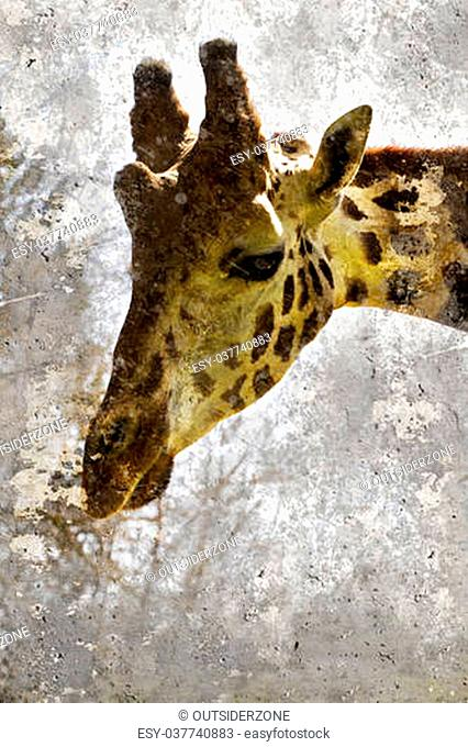 Artistic portrait with textured background, giraffe head