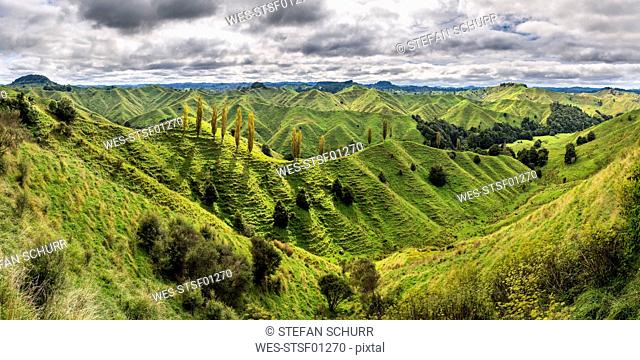 New Zealand, North Island, Taranaki, landscape seen from Forgotten World Highway
