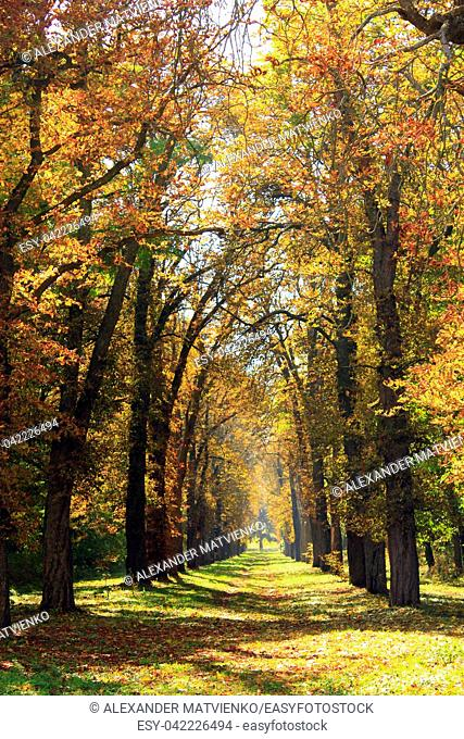 Autumn park with beautiful trees covered yellow and red foliage. Seasonal specific. Multicolored trees with path in autumn park