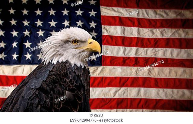 American Bald Eagle - symbol of america -with flag. United States of America patriotic symbols