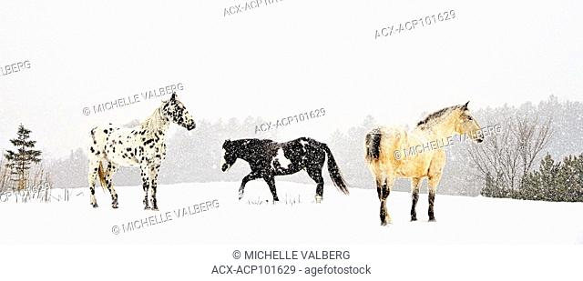 Horses in wakefield, Quebec, Canada, Winter, Snow