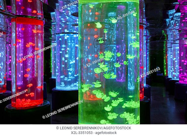 Colorful tanks with jellyfish in Dream Aquarium at OCT Harbour. Shenzhen, Guangdong Province, China