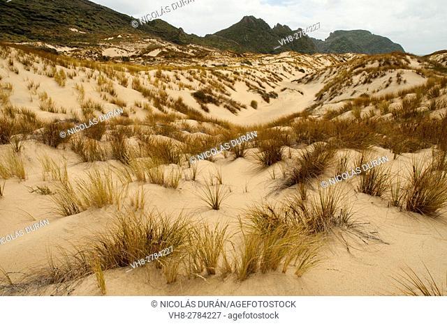 Sand dunes in Rakiura National Park, Stewart Island, New Zealand