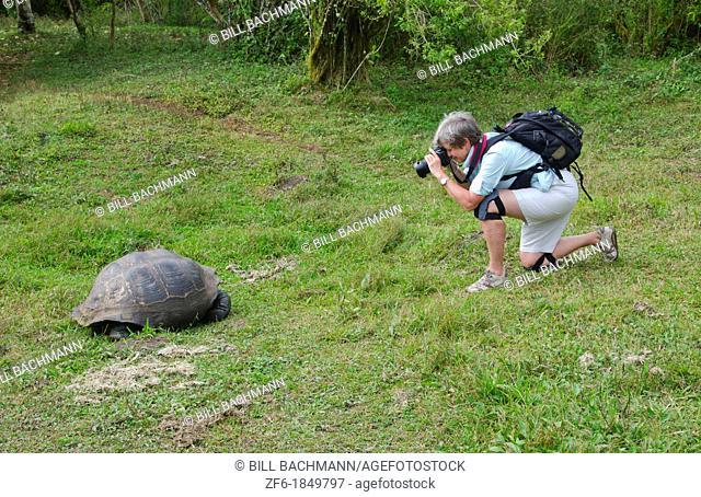 Tourists relaying to fabulous Giant Tortoises with shells on Santa Cruz Highlands Galapagos Islands Ecuador South America Galapagos