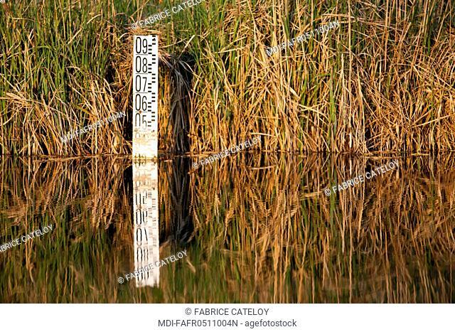 France - Ile de France - Seine-et-Marne - Fontenay-le-Vicomte - Water gauge in a pond