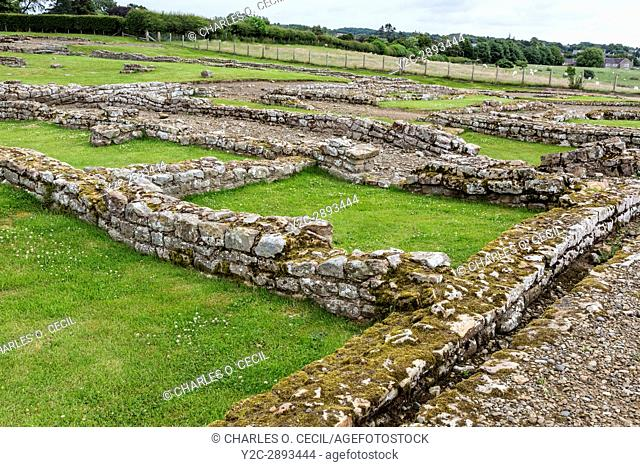 Northumberland, England, UK. Corbridge Roman Town. Collapsing underground drainage ditches from earlier settlements have caused undulations on the surface of...