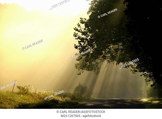 Sunlight and mist dominate an early summer morning, Pennsylvania, USA
