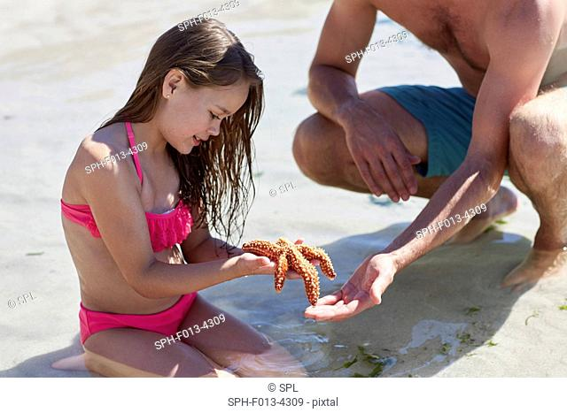 MODEL RELEASED. Father and daughter holding starfish on the beach
