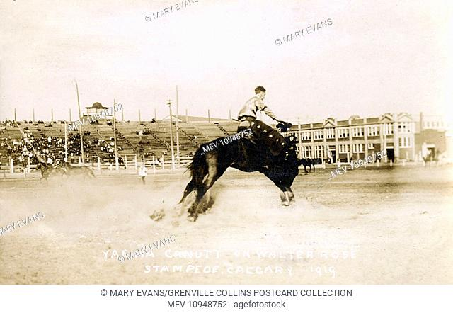Yakima Canutt riding 'Walter Rose' during the Calgary Stampede, canada