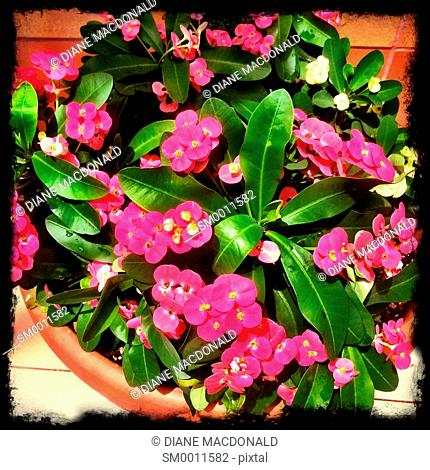A flowerpot with pink flowers
