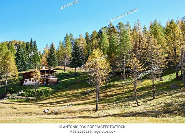 A mountain cottage in the forest. Alpe Devero. Municipality of Baceno. Province of Verbano-Cusio-Ossola. Piedmont. Italy