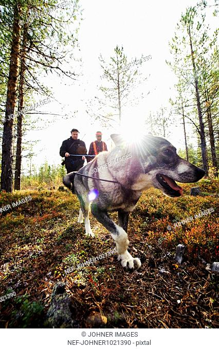 Gun dog walking in forest with two hunters