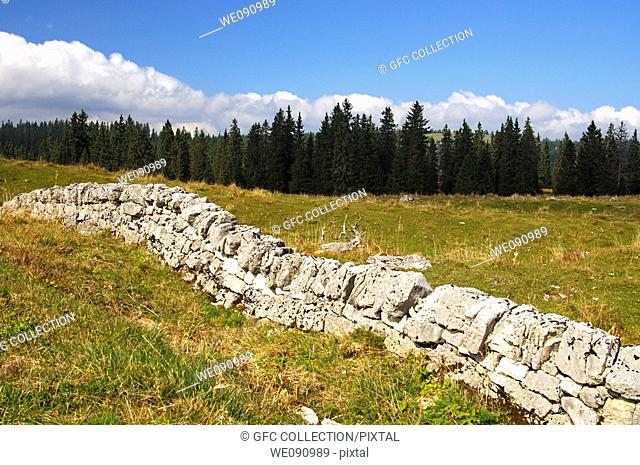 Dry stone wall, traditional pasture fencing in the Jura region, Col du Marchairuz, canton of Vaud, Switzerland