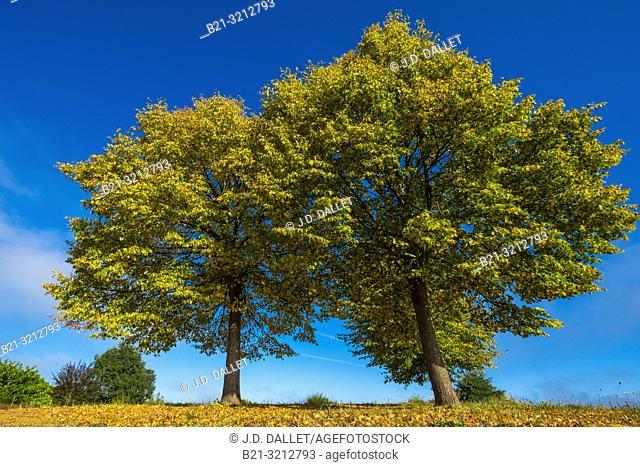 Autumn. France-Auvergne- Cantal- Landscape by Maurs la Jolie