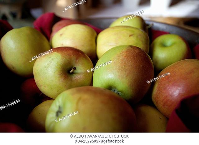 Apples, Abtenau, Salzburg region, Austria
