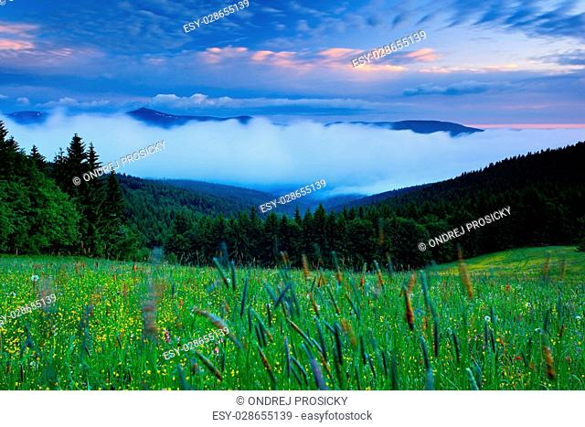 Krkonose mountain, flowered meadow in the spring, Snezka, Czech Republic