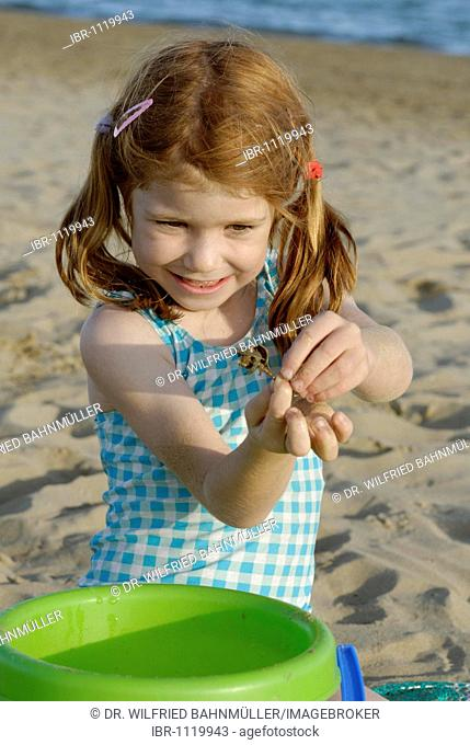 Girl playing on the beach with a hermit crab, seaside of the Adria, Venetia, Venice, Italy, Europe