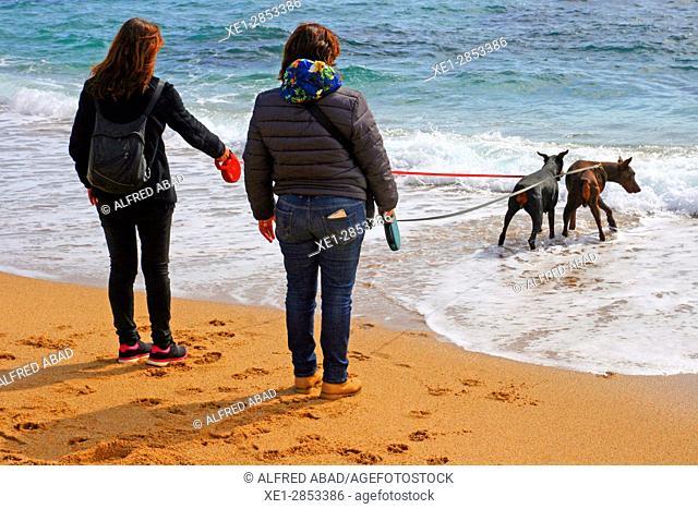 Dogs on the beach, Calella de Palafrugell, Costa Brava, Catalonia, Spain