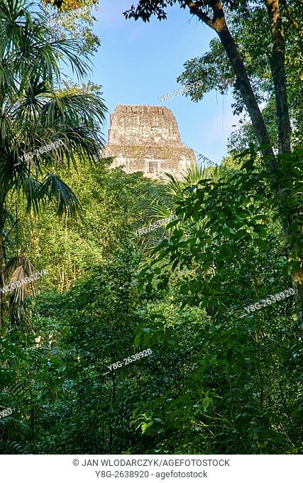 Maya Ruins - Temple IV, Tikal National Park, Guatemala, UNESCO